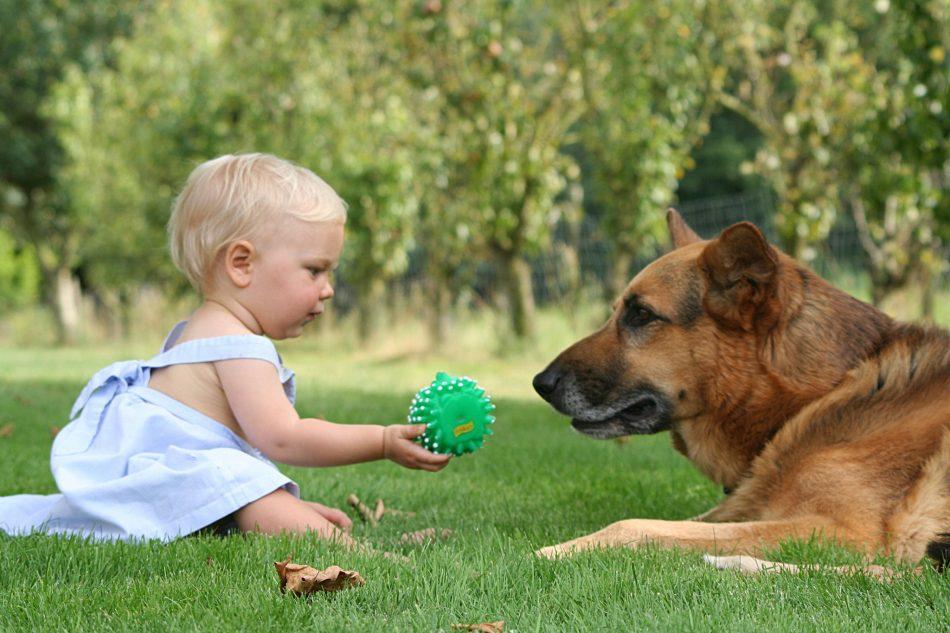 Çocuklarda Hayvan Isırmaları ve Sokmaları