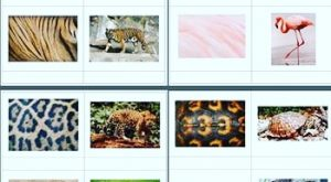 Okul Öncesi Hangi Resim Hangi Hayvanın Etkinliği